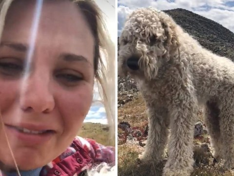 Dog found alive in mountains 19 days after being thrown from car in crash that killed owner