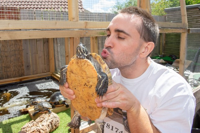 """Michael Butcher with his large collection of 1000 turtles, Staplehurst, Kent 31st July 2018. See National story NNTURTLES; A Teenage Mutant Ninja Turtle superfan has fulfilled his childhood dream by filling his home with more than a THOUSAND turtles. Michael Butcher has converted his home and back garden into a turtle and terrapin sanctuary, and nearly every room is filled with them - including his mum's bedroom. Terrapins, or sliders, are semi-aquatic, freshwater turtles, and bask on land, rocks or floating branches throughout the day. Along with his mother Denise, Michael gives abandoned and unwanted terrapins a home, often nursing them back to health. And the 38-year-old has plans to build plenty more sanctuaries in the future - because he just can't get enough turtles. Michael said: """"When I was a child I loved the Teenage Mutant Ninja Turtles - all I wanted was a turtle."""