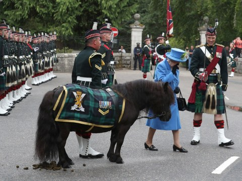 Queen forced to hold her nose as pony relieves himself next to her
