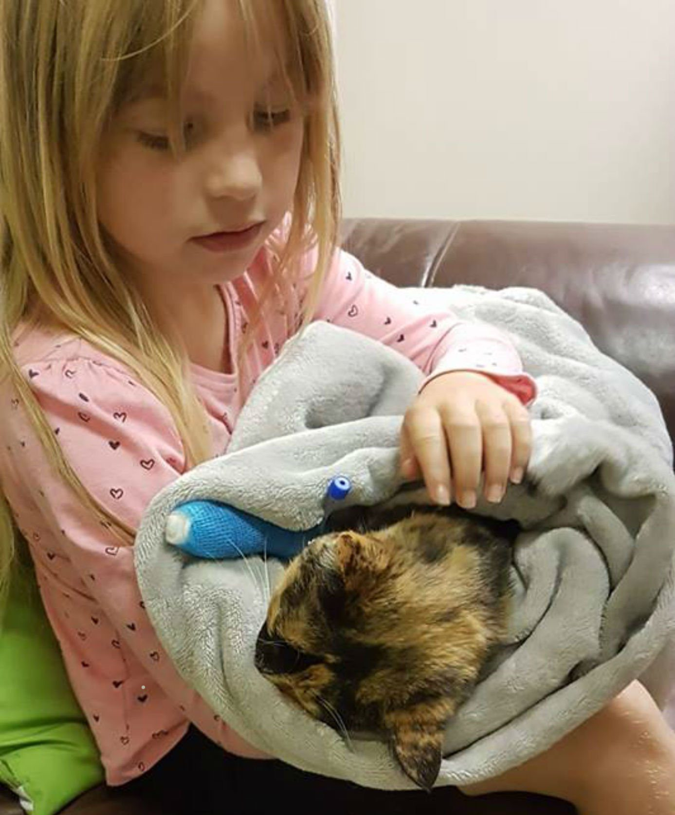 "Maddison cradling Millie half an hour before she had to be put down A SCOTS mum has posted a heart-rending photo of her daughter cuddling her dying cat to capture the ""evil scum"" who poisoned it with antifreeze. Madison Waddell, from Camelon, Falkirk, was pictured cradling her poorly moggy wrapped up in a blanket half an hour before she had to be put down. Millie, a Tortoiseshell cat, was found looking unwell by her owners after they returned from holiday and was rushed to the vet on Sunday evening. Vets explained to the family that Millie, only five-years-old, had antifreeze poisoning and that she only had a 10% chance of survival. Madison, seven-years-old, and Millie had been best friends for almost half of the youngsters life. So Madison was devastated when Millie had to be put down on Monday after treatment for antifreeze poisoning didn't work."