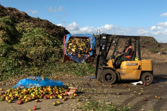 Fork lift truck at site for recycling food and garden waste, Suffolk, UK. (Photo by BuildPix/Construction Photography/Avalon/Getty Images)