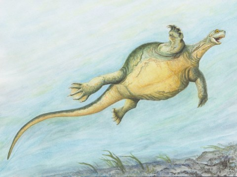 Newly discovered ancient turtle didn't have a shell, scientists say