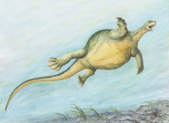 "Embargoed to 1800 Wednesday August 22 Undated handout artist impression issued by EurekaAlert! of newly named species Eorhynchochelys, it is a ""turtle"" that lived more than 200 million years ago and had a Frisbee-shaped body but no shell. Palaeontologist Dr Olivier Rieppel, from the Field Museum in Chicago, US, said: ""This creature was over six feet long, it had a strange disc-like body and a long tail, and the anterior part of its jaws developed into this strange beak. PRESS ASSOCIATION Photo. Issue date: Wednesday August 22, 2018. A complete fossilised skeleton of E. sinensis was found embedded in 228 million-year-old rocks in Guizhou Province, China. The creature is described in the latest issue of the journal Nature. See PA story SCIENCE Turtle. Photo credit should read: Adrienne Stroup/Field Museum/PA Wire NOTE TO EDITORS: This handout photo may only be used in for editorial reporting purposes for the contemporaneous illustration of events, things or the people in the image or facts mentioned in the caption. Reuse of the picture may require further permission from the copyright holder."