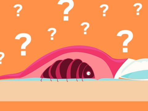 Do you have bedbugs? Learn how to spot the signs