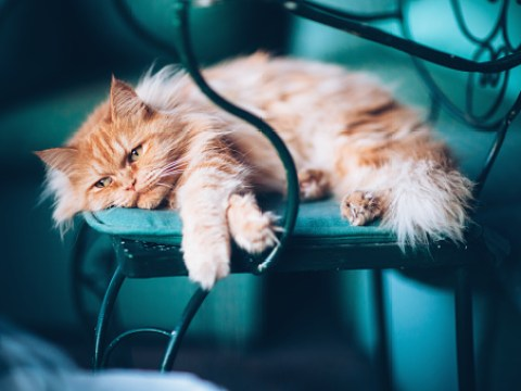 How to spot and treat fleas on your cat