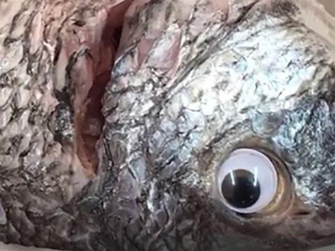 Shop caught sticking googly eyes on fish to make them look fresh