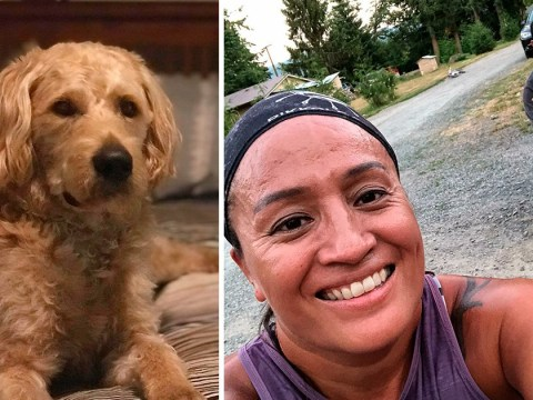 Comfort dog bought by couple who survived Vegas massacre is shot dead 'by neighbour'