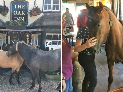 A horse walks into a bar…