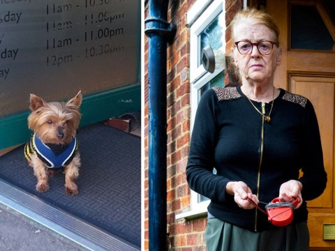 Fearsome Yorkshire terrier 'with only four teeth' seized for trying to bite postwoman