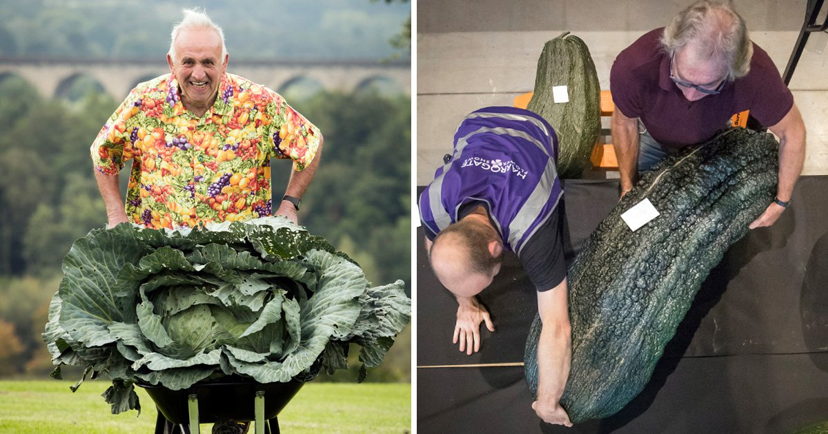 Look at all the giant vegetables from the Harrogate Flower Show