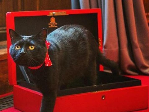 Panic in Whitehall as Gladstone the Treasury cat goes missing