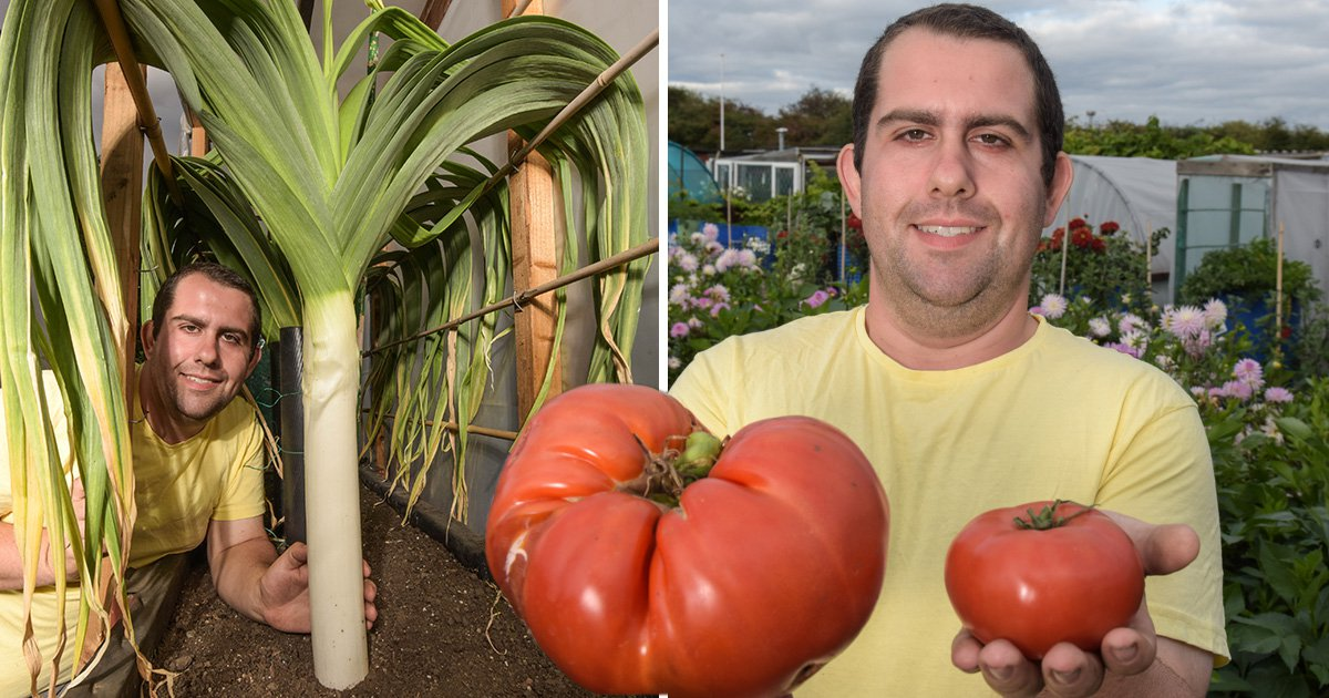 Giant vegetable whisperer strokes his leeks to help them grow