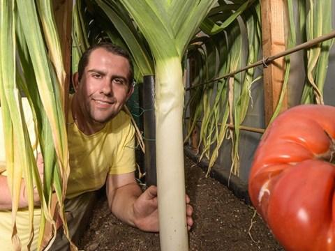 Giant vegetable whisperer strokes his leeks to help them grow