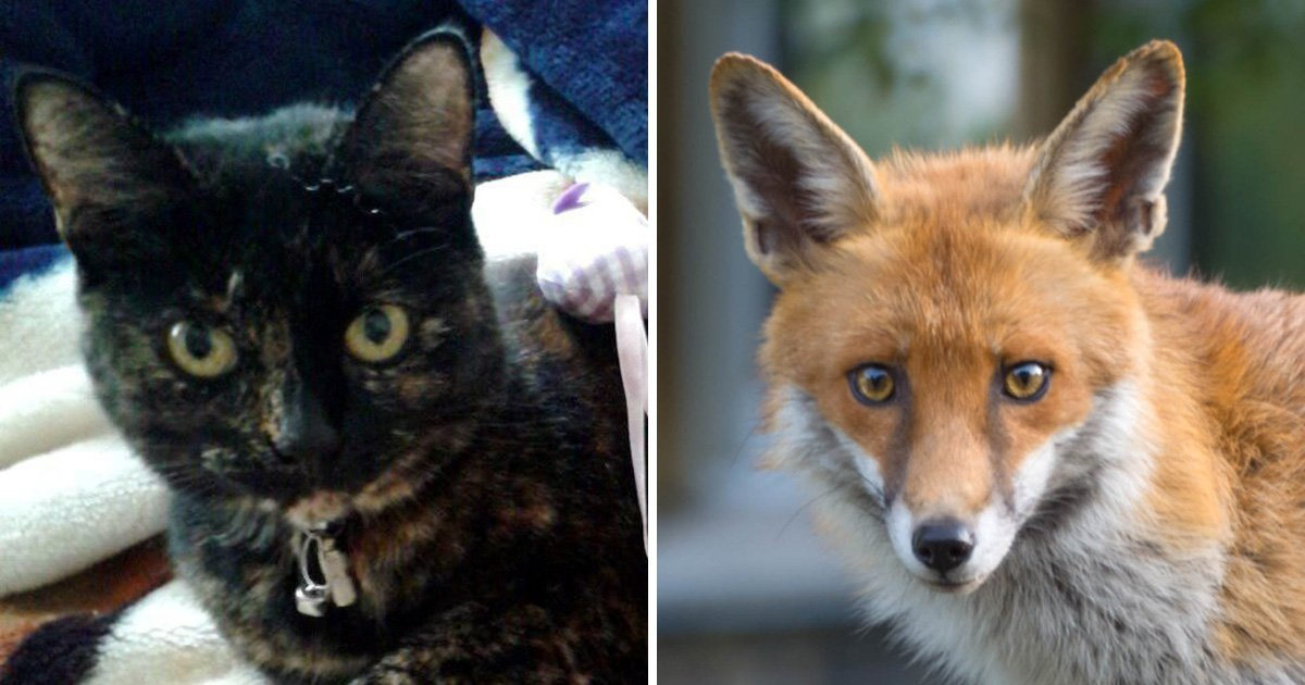 Three-year hunt for Croydon cat killer ends as police say it was foxes