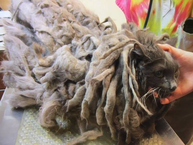 Abandoned cat gets much-needed haircut to remove 4.5lbs of matted fur and dirt