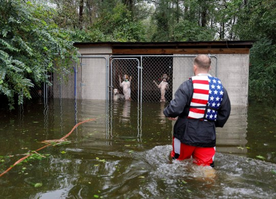 REFILE - CORRECTING IDENTITY OF RESCUER Panicked dogs that were left caged by an owner who fled rising flood waters in the aftermath of Hurricane Florence, are rescued by volunteer rescuer Ryan Nichols of Longview, Texas, in Leland, North Carolina, U.S., September 16, 2018. REUTERS/Jonathan Drake