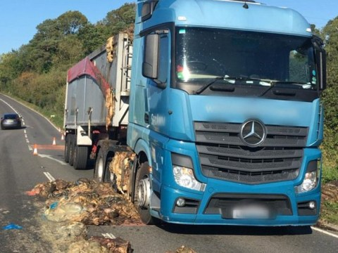 Lorry driver has really offal day after 2 tonnes of animal guts spill all over the road