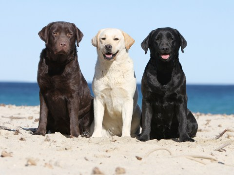 The colour of your dog could determine how long it'll live