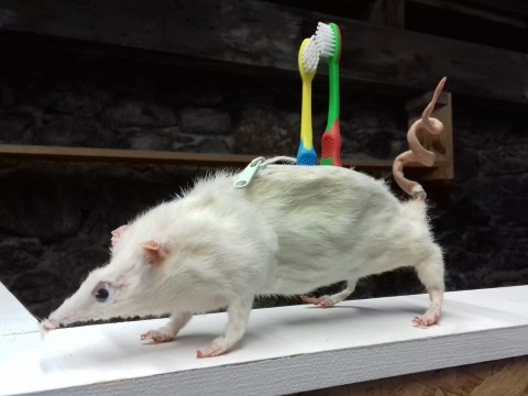 Meet the taxidermist selling magnetic mouse earrings and rats with googly eyes