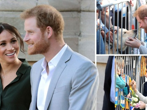 Prince Harry and Meghan Markle go gooey-eyed over cute dogs as they get distracted during first visit to Sussex