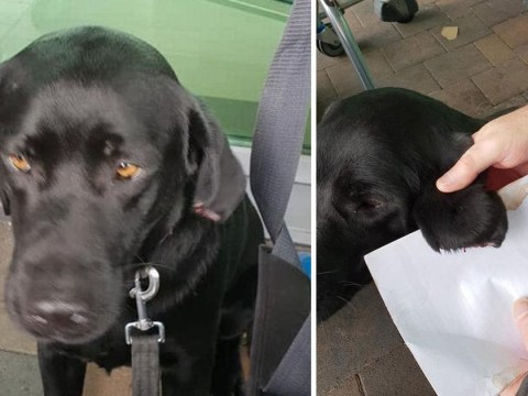 Dog had ear sliced off as he sat outside Tesco waiting for owner