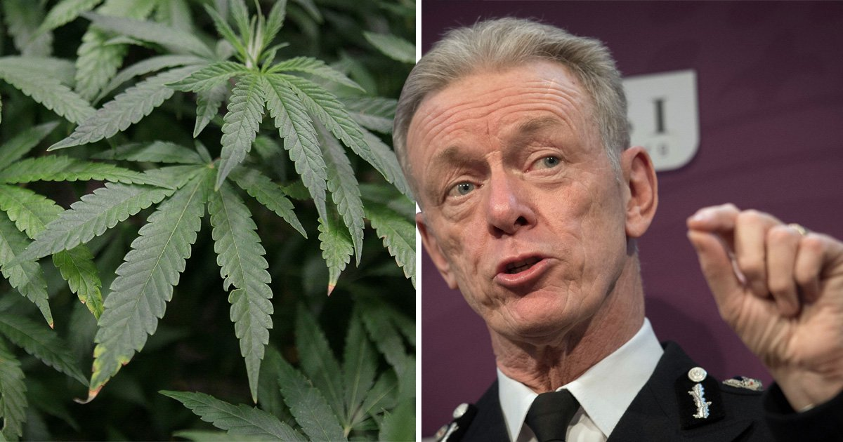 Former Met Police boss calls for urgent review into legalising cannabis