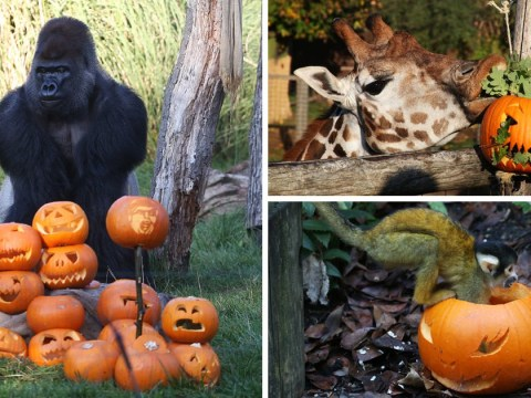 Halloween comes early for the animals at London Zoo