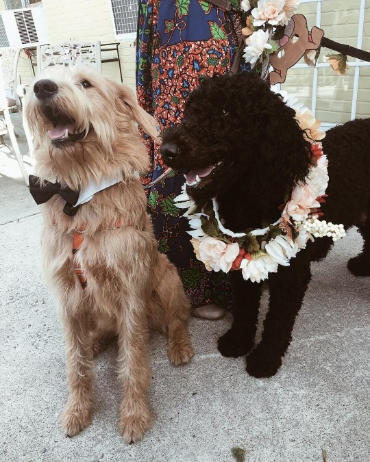 Two dogs got married in a wedding ceremony at a care home in