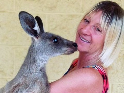 Woman seriously injured after kangaroo attacks her family at their home