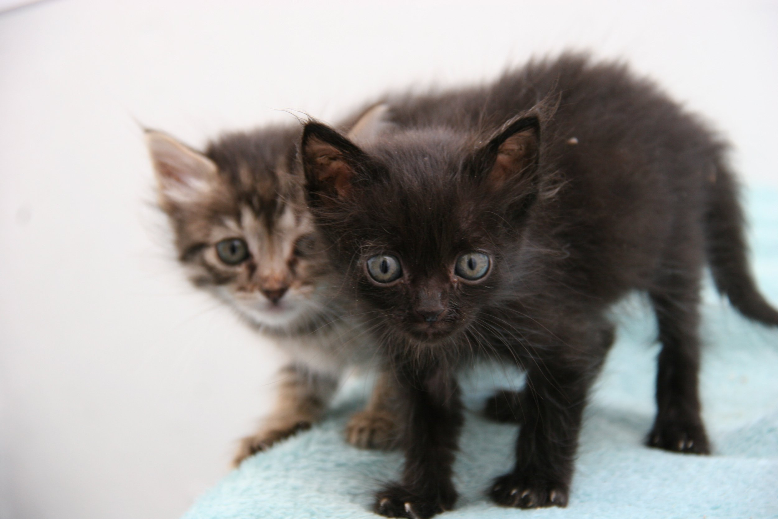 Kittens locked in a car for a week on journey from cyprus to UK rescued