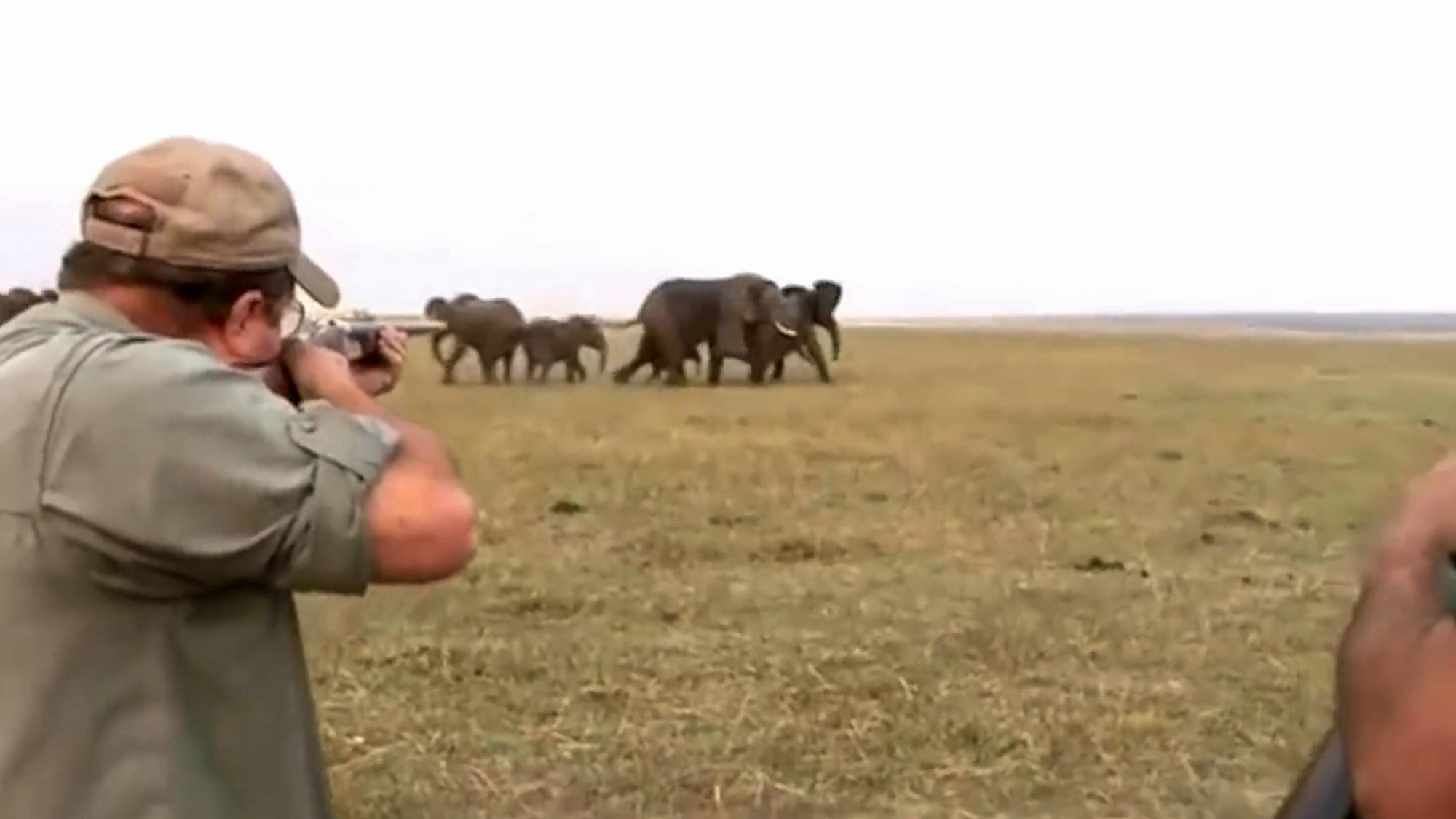 """Pic Shows: The hunters shooting at the elephant; This is the moment angry elephants charge two hunters in South Africa after they shoot a member of the herd. The dramatic video that shows the hunters shouting as they run for their lives was shot in the Nakabolelwa Conservancy, in North-eastern Namibia's Zambezi region. The footage starts with two men aiming at elephants some distance away, and one of them can be heard saying: """"Hit between the eyes."""" Both men then shoot at a large elephant identified as a male bull elephant. The wounded animal then runs some distance from the herd before eventually collapsing, prompting the rest of the herd to start bellowing and charging at the hunters. The footage was reportedly shot over three years ago according to Namibia-based big-game hunter Corne Kruger, who said he was surprised that it had now gone viral online. He said that he employed 12 people to organise hunting safaris which put valuable funds into the local communities as well as controlled big-game numbers. He said that the video showed the perfectly legal and licensed shooting of an elephant and added: """"I don't know why it only surfaced now."""" He said that he hunted no more than """"two elephants a year"""" in line with the quota that was made available to hunters. If the hunter is a foreign national, they need to be accompanied by a licensed local professional hunter."""