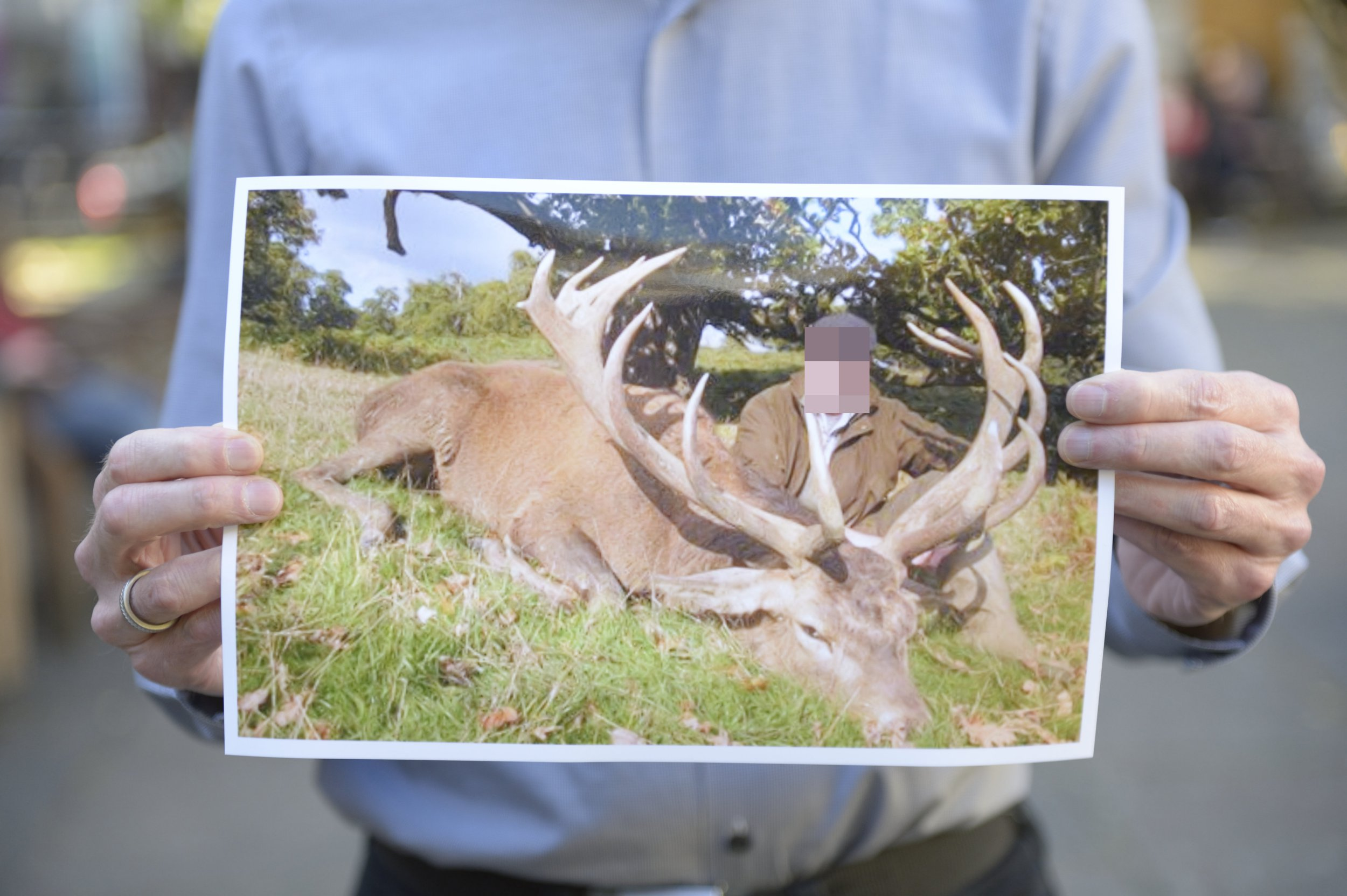 A member of Bedfordshire Against Trophy Hunting - BATH holding up a picture of what he says is a dead deer in Woburn deer park in Bedfordshire shot by a foreign hunter. See SWNS copy SWCAdeer: Foreign hunters are paying more ?9,000 to shoot down British stags at on special arranged tours to a deer park, campaigners have claimed. People are coming from as far at the USA, Denmark and Finland to a deer park owned by the world famous Woburn Safari Park in Bedfordshire to kill magnificent Red Stags. Conservationists say there are no assurances that incoming hunters have any gun experiences and claim that anyone who can afford it, can kill a deer.