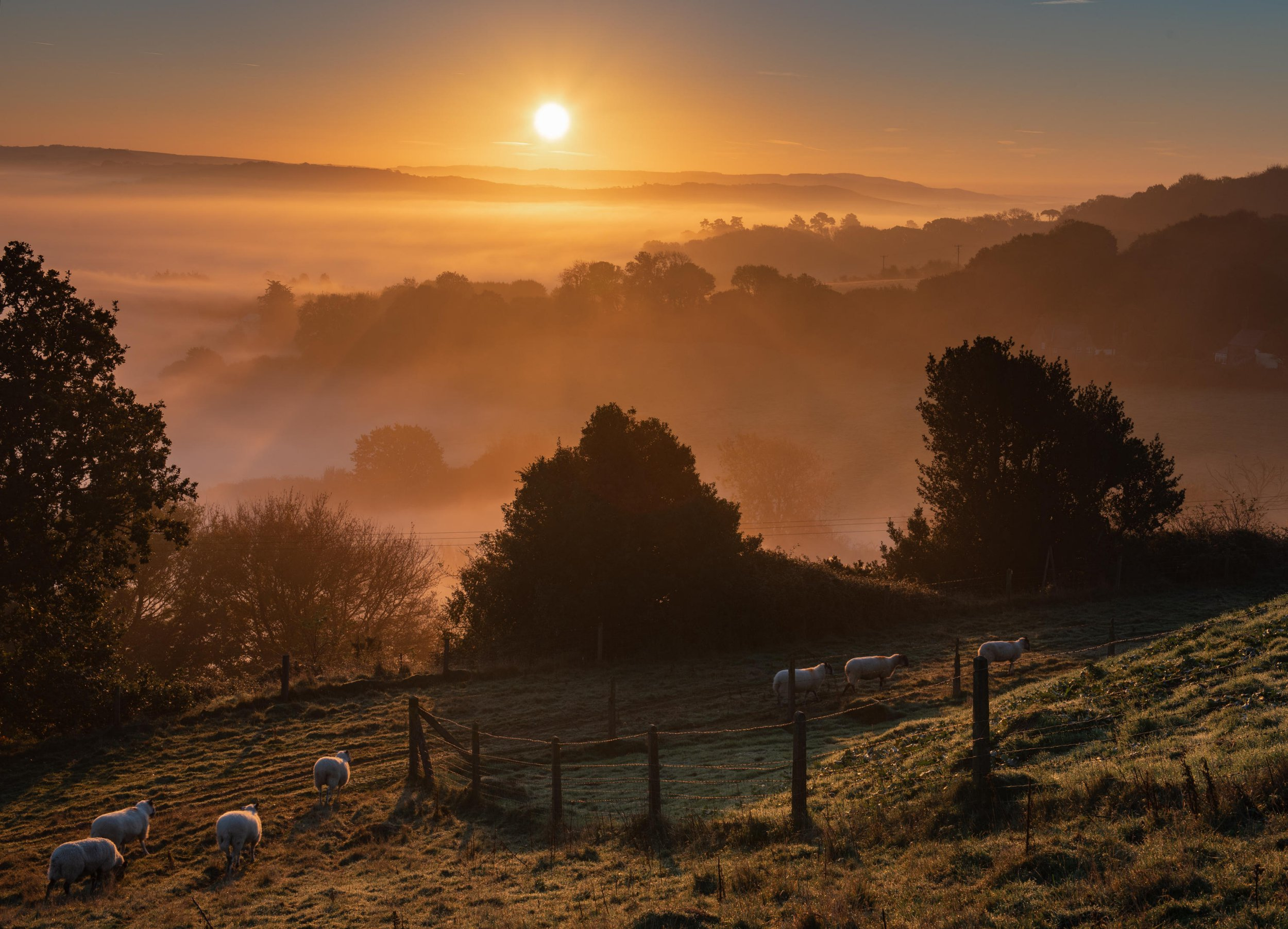 Alamy Live News. PXC204 Bridport, Dorset, UK. 21st October 2018. UK Weather: Sheep at sunrise on a misty morning in rural West Dorset. Credit: Celia McMahon/Alamy Live News This is an Alamy Live News image and may not be part of your current Alamy deal . If you are unsure, please contact our sales team to check.