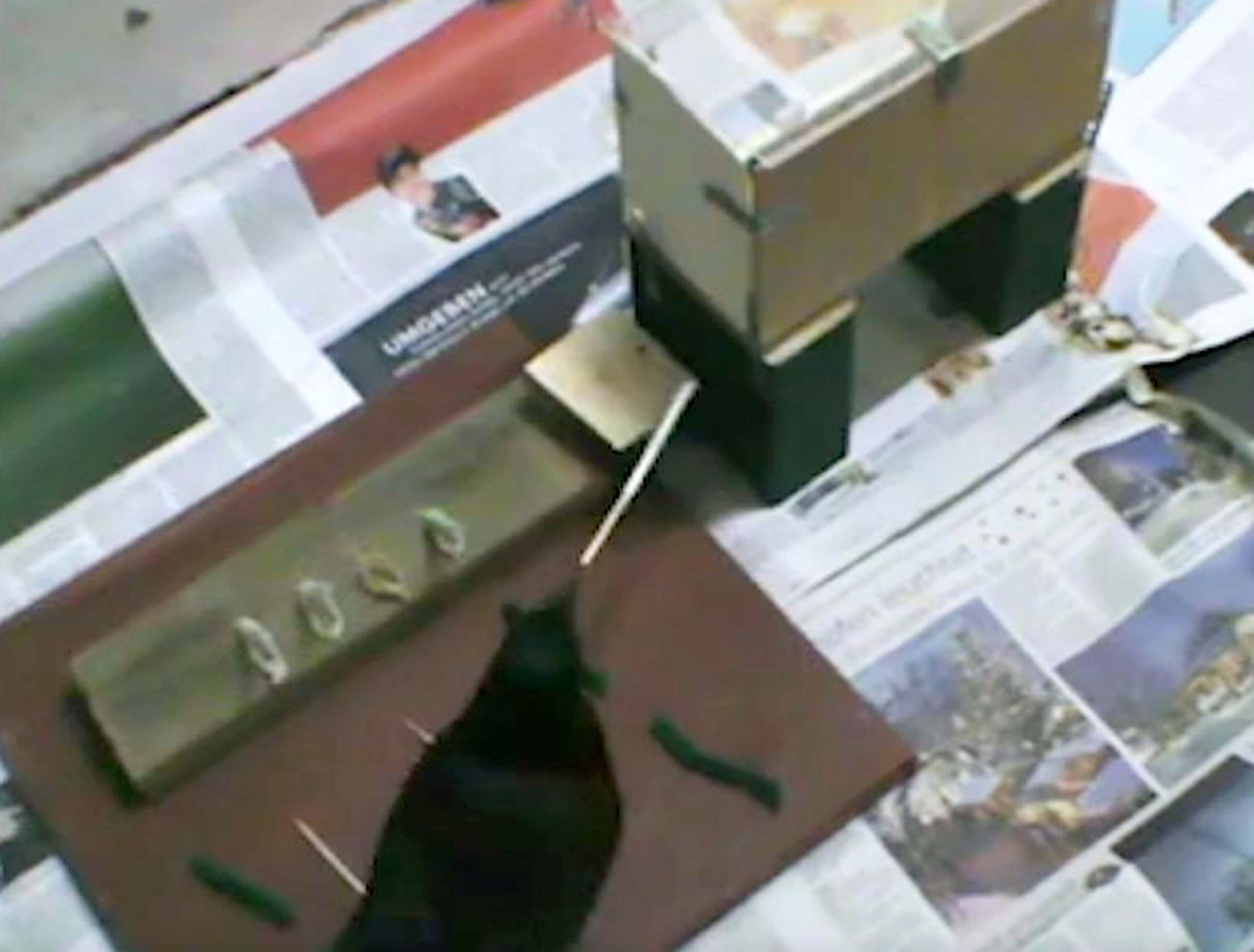 """Undated handout grab taken from video issued by Oxford University of a Caledonian crow slotting together rod pieces to create a tool long enough to extract a food reward, a feat previously only seen in humans and great apes. PRESS ASSOCIATION Photo. Issue date: Wednesday October 24, 2018. Researcher Dr Auguste von Bayern, from Oxford University and the Max-Planck Institute for Ornithology in Germany, said: """"The finding is remarkable because the crows received no assistance or training in making these combinations, they figured it out by themselves"""". See PA story SCIENCE Crows. Photo credit should read: Oxford University/PA Wire NOTE TO EDITORS: This handout photo may only be used in for editorial reporting purposes for the contemporaneous illustration of events, things or the people in the image or facts mentioned in the caption. Reuse of the picture may require further permission from the copyright holder."""