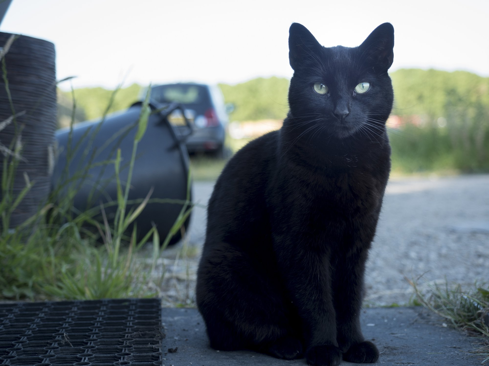 Here's why we celebrate National Black Cat Day