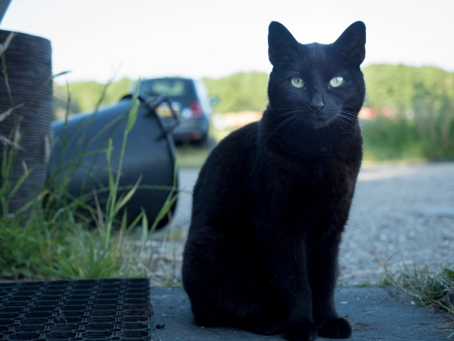Outdoors composition of a beautiful black cat and black objects.