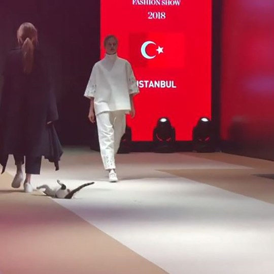 Cat Walks On Catwalk During Turkish Fashion Show Metro News