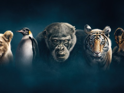 Dynasties episode one review: David Attenborough's riskiest series yet is undoubtedly one of his finest