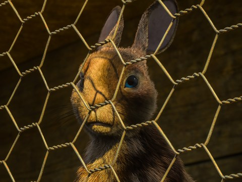 Watership Down review: A new generation of kids will have something to lose sleep over