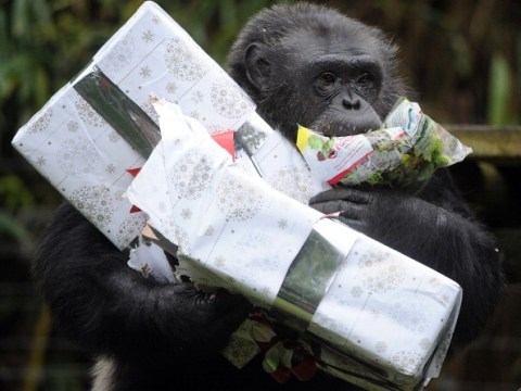 When does Christmas at London Zoo start and how to get tickets?