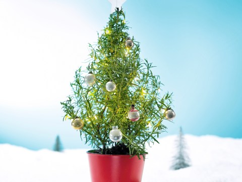 Waitrose is selling rosemary Christmas trees that you can actually eat