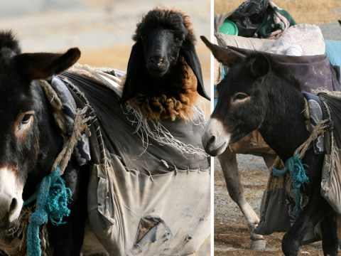 Donkey nannies exist and this is the best news we've heard all year