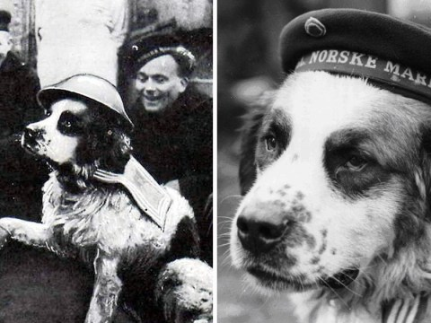 Bamse the war hero dog who guided soldiers home from pub and broke up fights