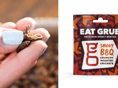 You can buy edible insects at Sainsbury's from Monday