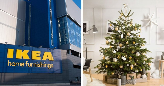 Ikea S 5 Real Christmas Tree Deal Starts Again This Week