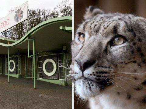 Snow leopard shot dead after escaping from its cage at UK zoo