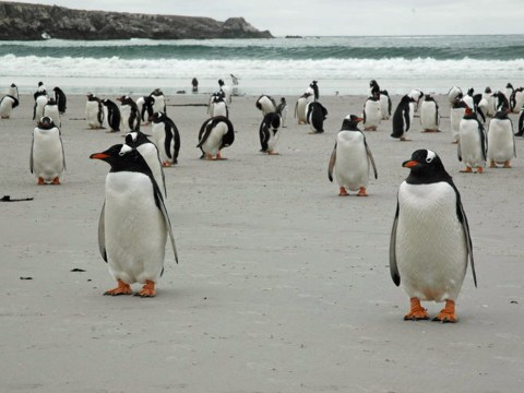You can now buy an entire island filled with penguins