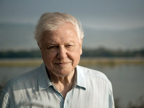 David Attenborough's new series will be his most ambitious yet as BBC share first picture of One Planet, Seven Worlds