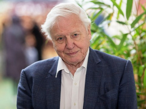 David Attenborough reveals he cries 'more easily nowadays' as he talks the emotional reaction to Dynasties