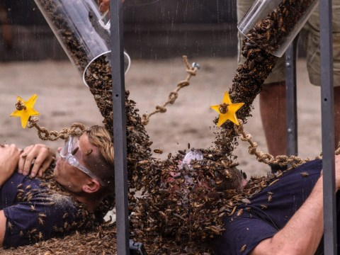 I'm a Celeb's James McVey and Nick Knowles get 10,000 bugs to the face in latest gruelling trial